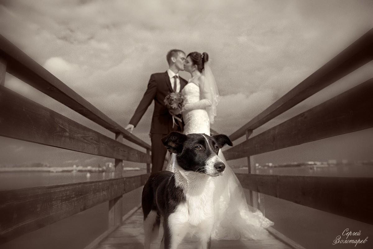 Свадьба Владимира и Екатерины 7